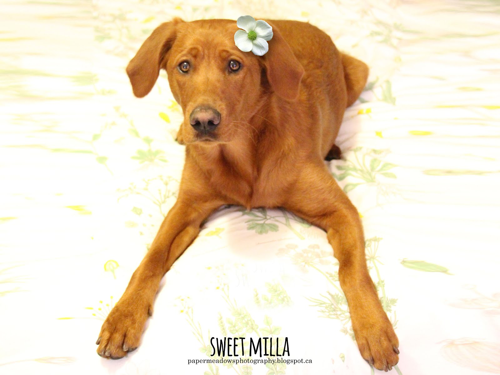 Sweet Milla