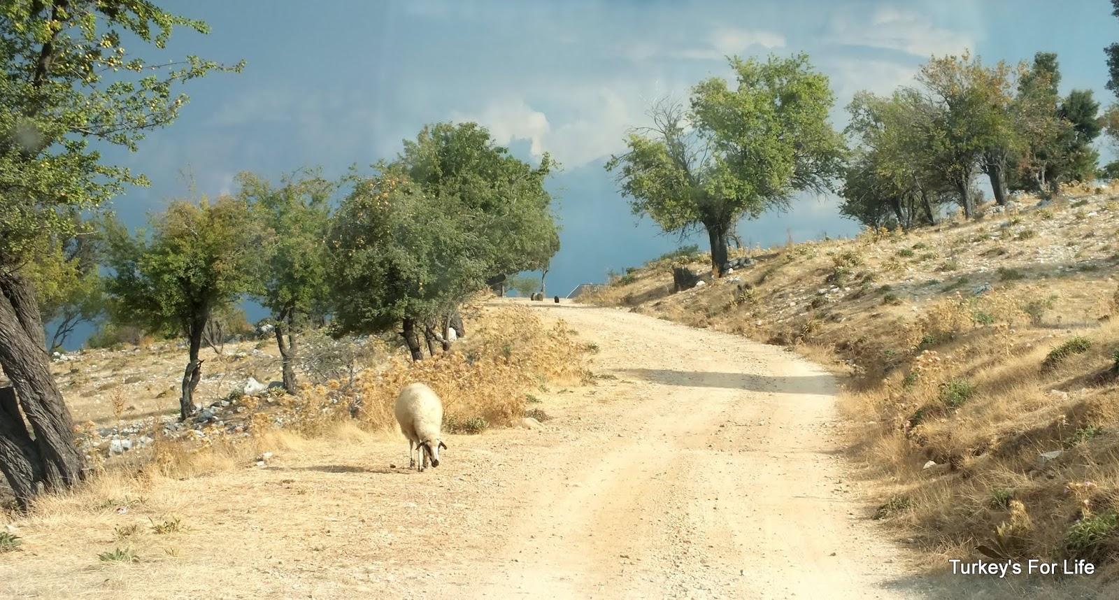 Heading Up Babadağ Mountain, Fethiye