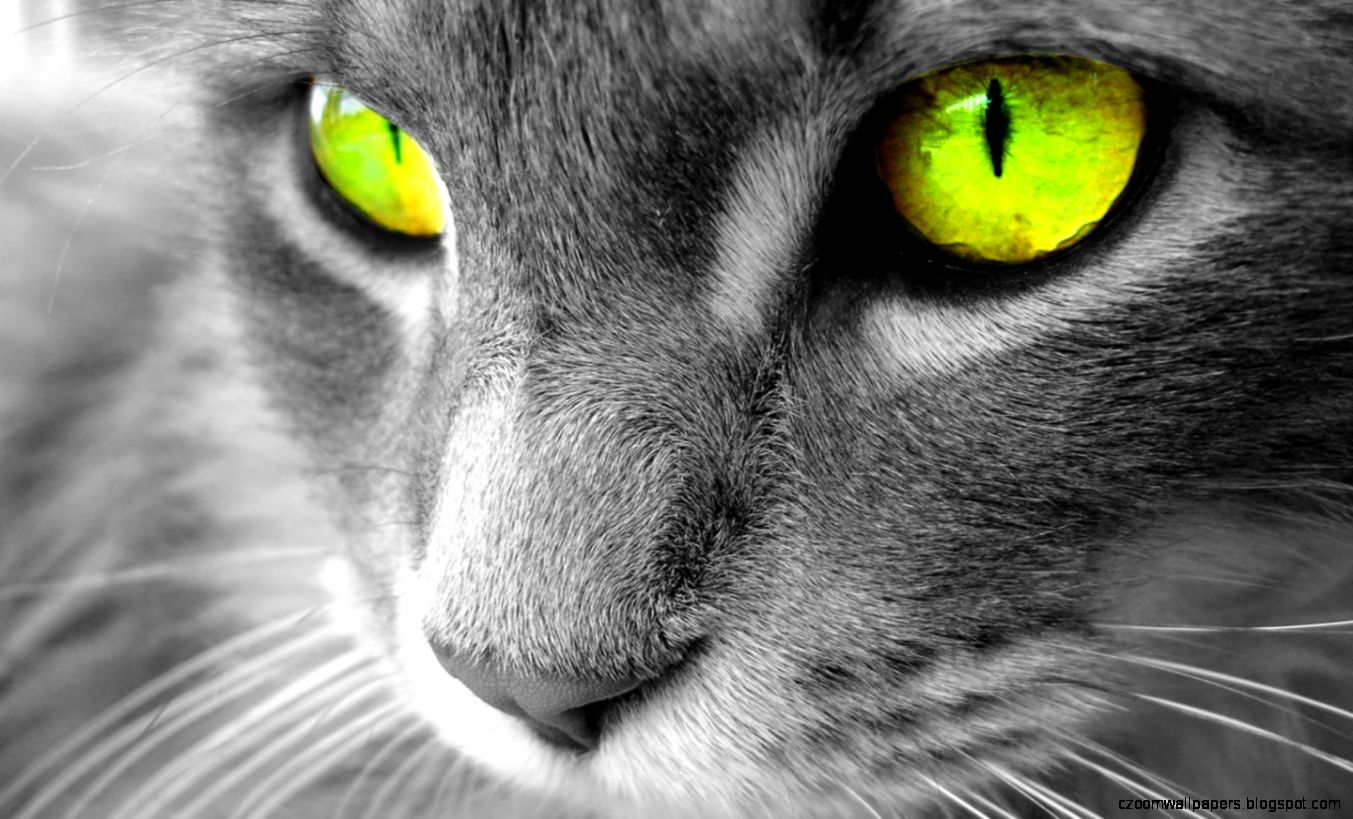 Fantastic Cat Wallpapers  Full HD Pictures