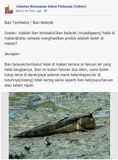 Hukum Makan Ikan Tembakul / Ikan Belacak