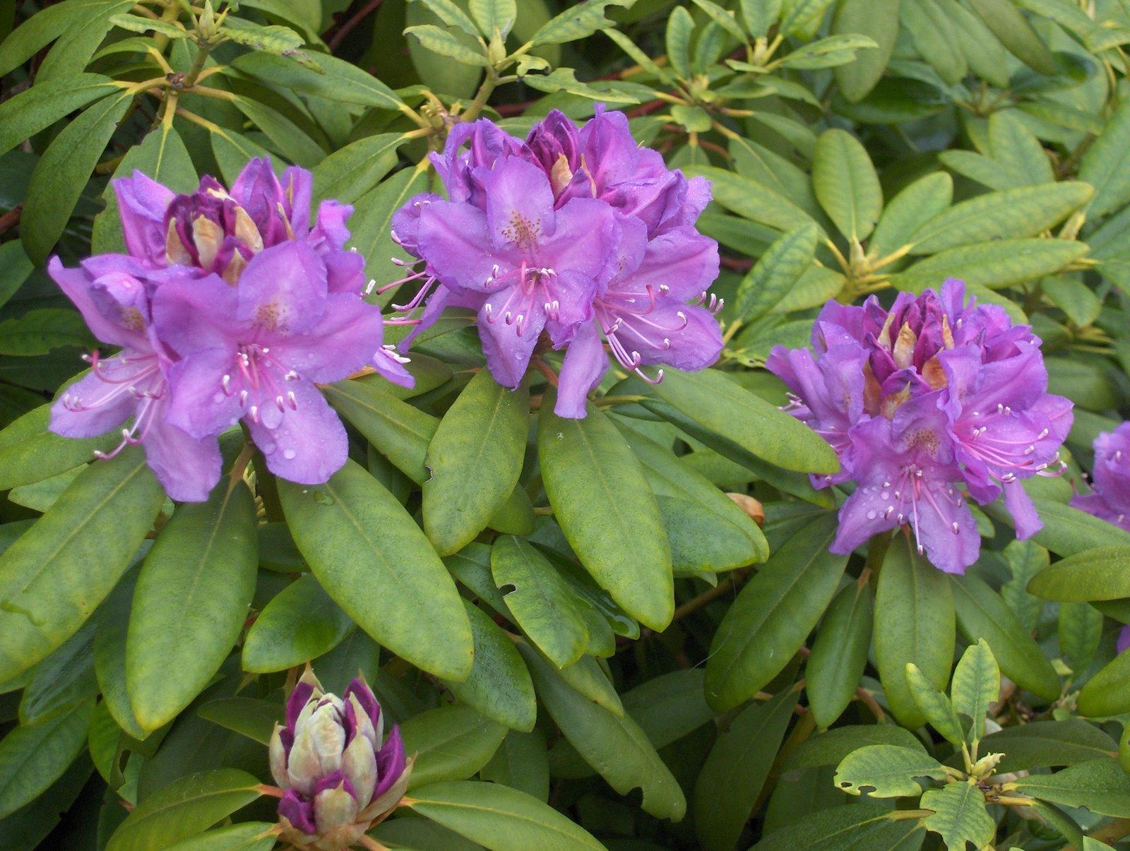 Micmousse r siste micmousse offre des fleurs for Offre des fleurs