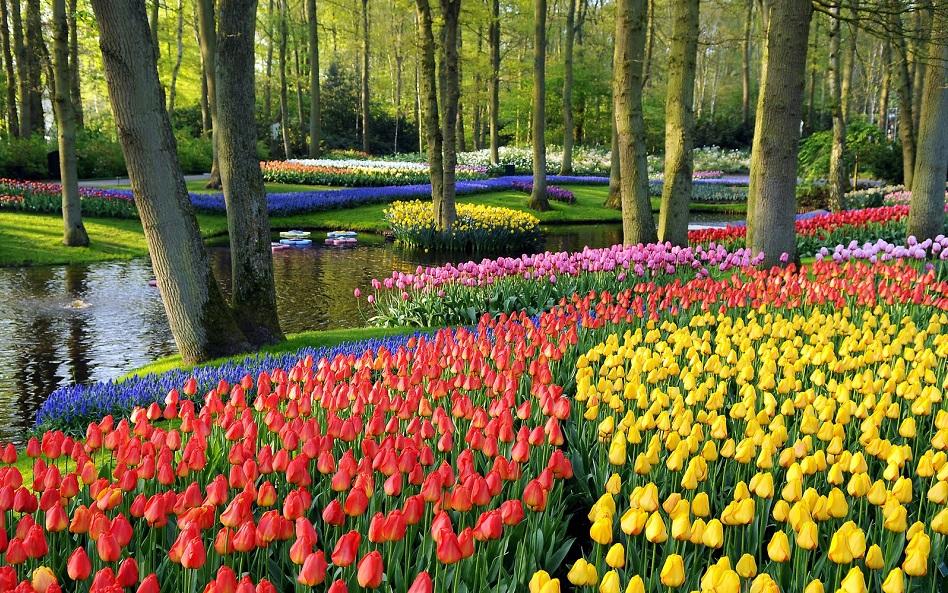 Jardim De Flores Keukenhof Em Amsterdã ~ Fotos De Um Jardim De Rosas