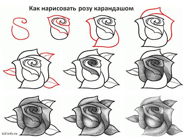 Картинки как рисовать розу поэтапно