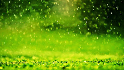 Green rain free download desktop wallpaper