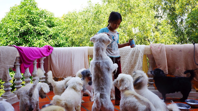 CAPA - Paradis des chiens et chats