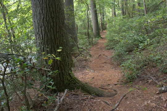 Trail around Byrd Lake and Cumberland Mountain State Park