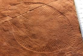 vida del proterozoico