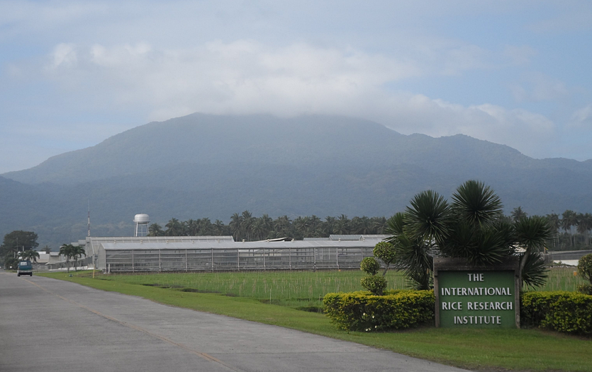 IRRI, International Rice Research Institute