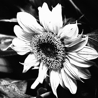 Flower black and white free picture