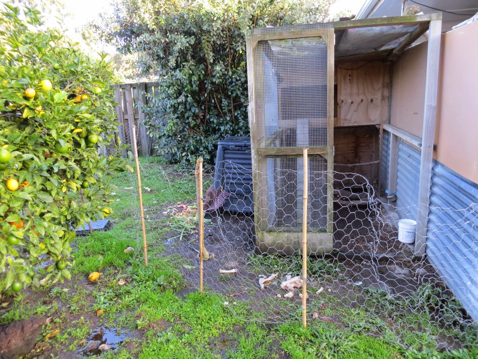 Keeping Chickens Nz Chicken Fencing Or Get Out Of My Garden