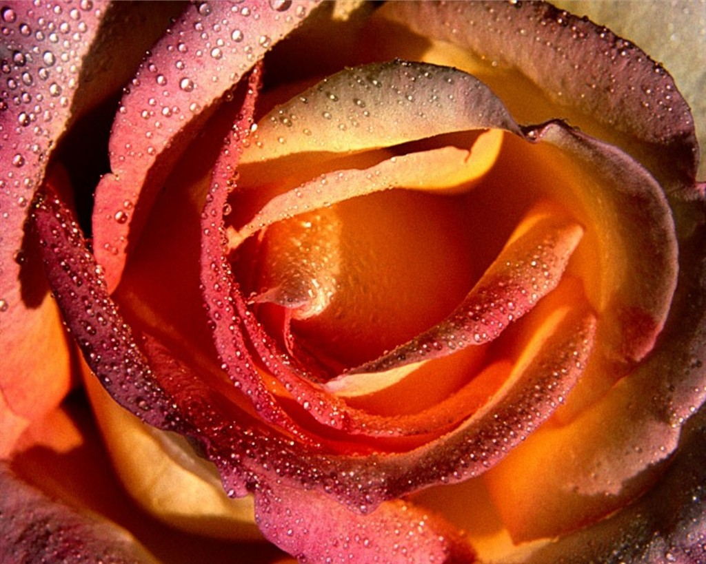 Forum on this topic: E. G. Daily, flower-tucci/