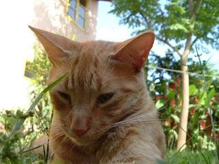 Nomes Para Gatos Masculinos Amarelos