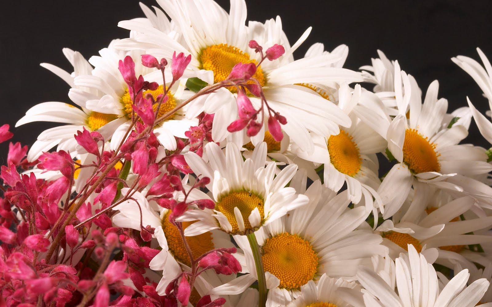 http://3.bp.blogspot.com/-b_27JelW2og/UFhWJBBCLVI/AAAAAAAAAmw/VxQE9wBvVV4/s1600/connect-indya.blogspot.com+-Flowers+%2819%29.jpg