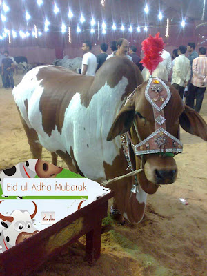 Eid Mubarak by Qurbani cow