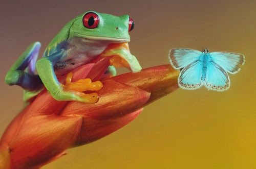 08-Wil-Mijer-Frog-Macro-Photography-www-designstack-co