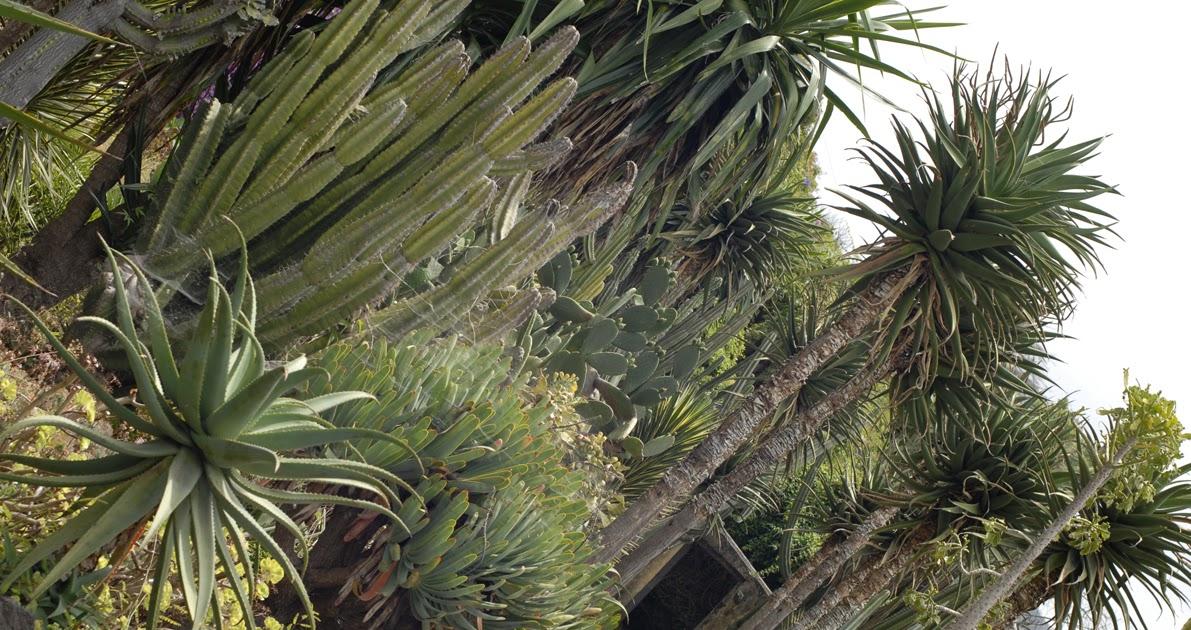 paradis express jardin botanique de funchal madeira
