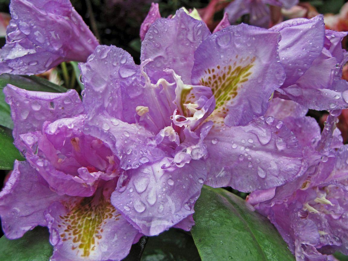 Beautiful Flowers with Rain Water Drops   cini clips
