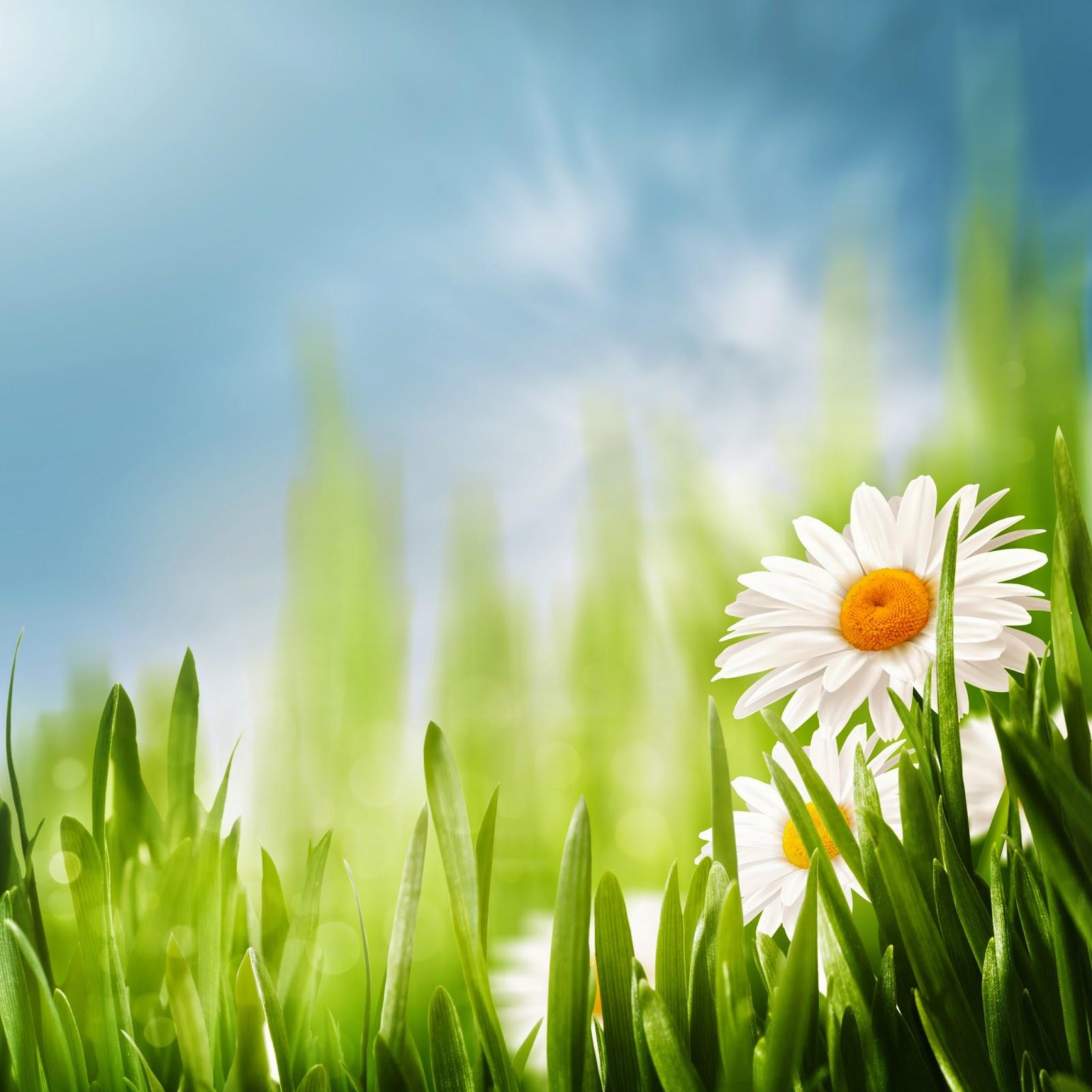 Imagenes fotograficas imagenes bonitas de flores para - Fotos de flores bonitas ...