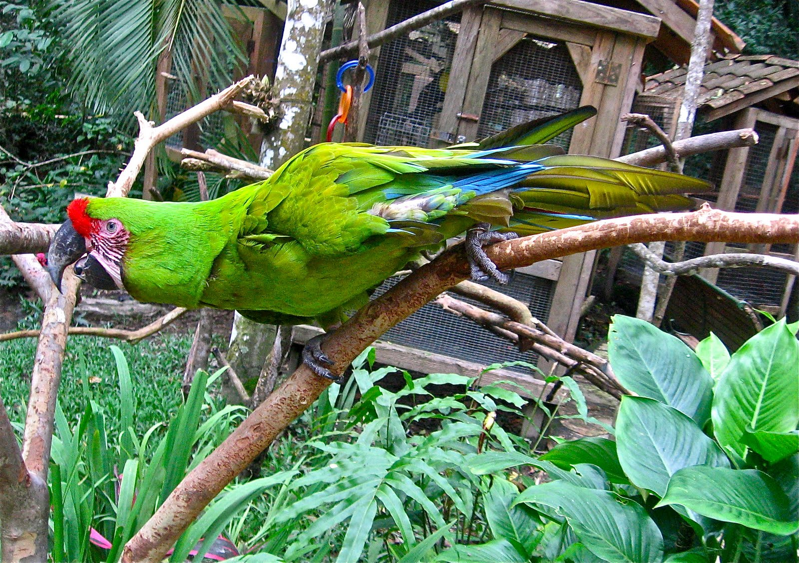 Birds Of Honduras