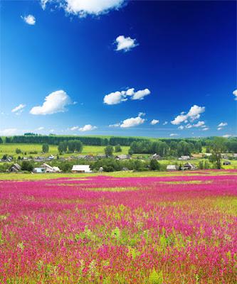 Campo de flores silvestres muy cerca de la comunidad rural - Paisajes naturales - Unforgettable natural landscapes