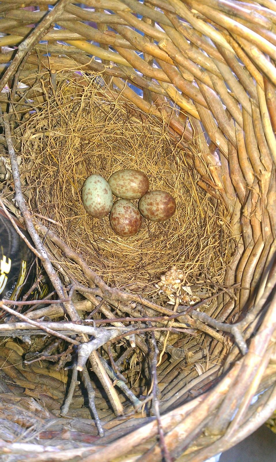 The 1960s: American Pop Culture History - RetroWaste Pictures of mockingbird eggs