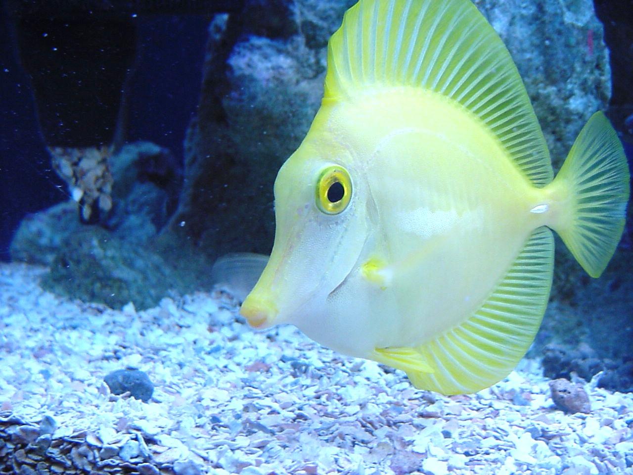 http://3.bp.blogspot.com/-bben4hnaxUY/TZVJ_PYhmpI/AAAAAAAABDI/wayPr8I_yIg/s1600/yellow-fish.jpg