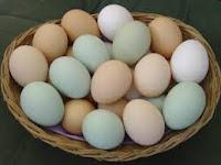 البيض من الاكلات المفيدة للشعر
