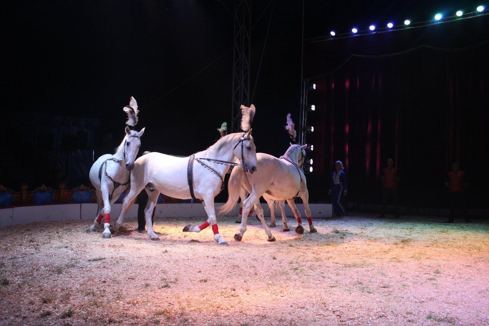Cirkus Ales 2020 Zdjęcia