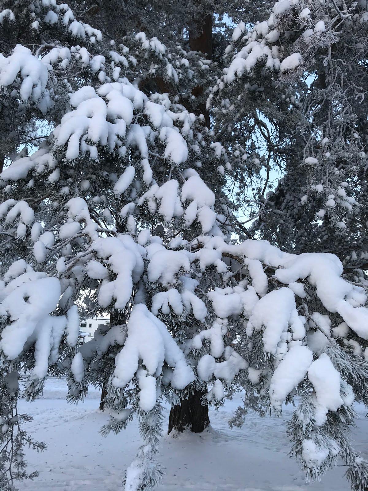 Härligt vinterland!