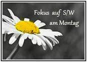 Projekte: s/w Fokus am Montag