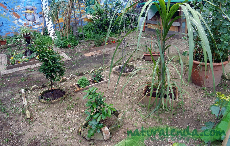 pequeño jardin de frutales
