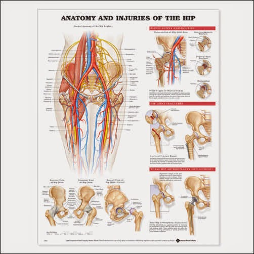 Total Athletic Therapy: Study Spotlight: The Layer Concept in ...