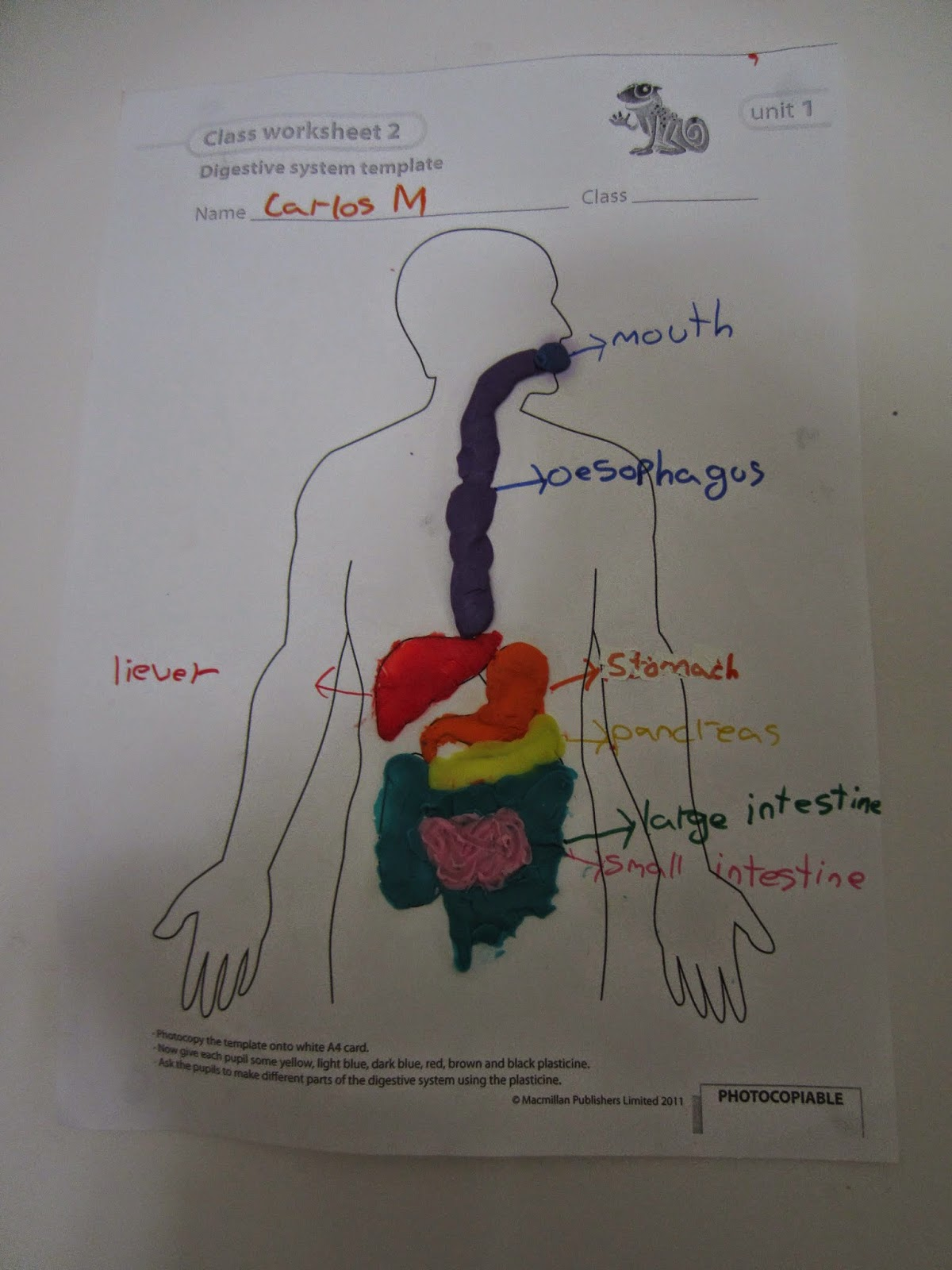 excretory system project Melody projects delhi biology models math models it shows the excretory system using bottlesthe 2d model decently pasted on a sheet with handmade colored.
