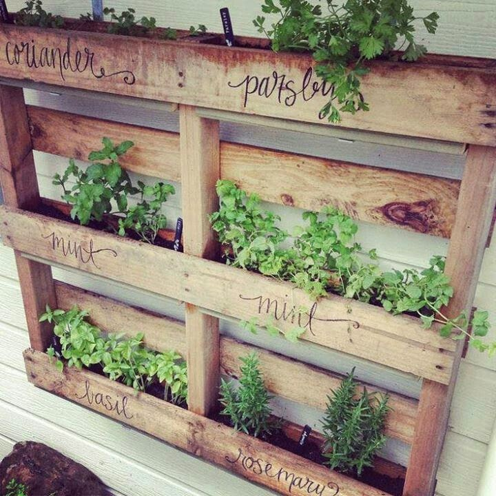 Herbs in reclaimed wooden pallets