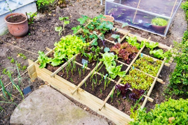 Dica para fazer uma horta em apenas um metro quadrado