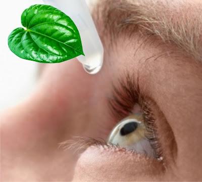 Kebutaan Akibat Penggunaan Air Rebusan Daun Sirih