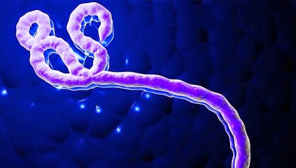 10 fatos que você precisa saber sobre o Ébola