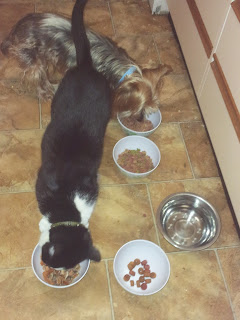 Image: Mr Woof and Mr Bumpy eating their canned food.
