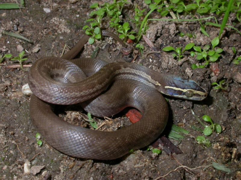 how to catch a garter snake in your house