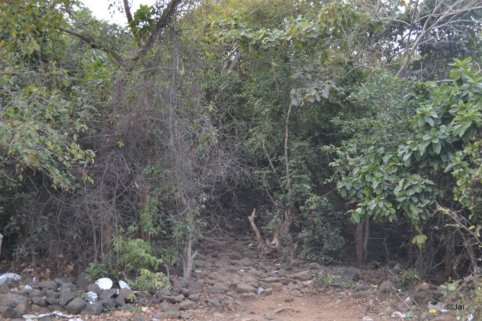 Dense forest on the island inside maithon dam