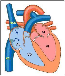 cavidades del corazón