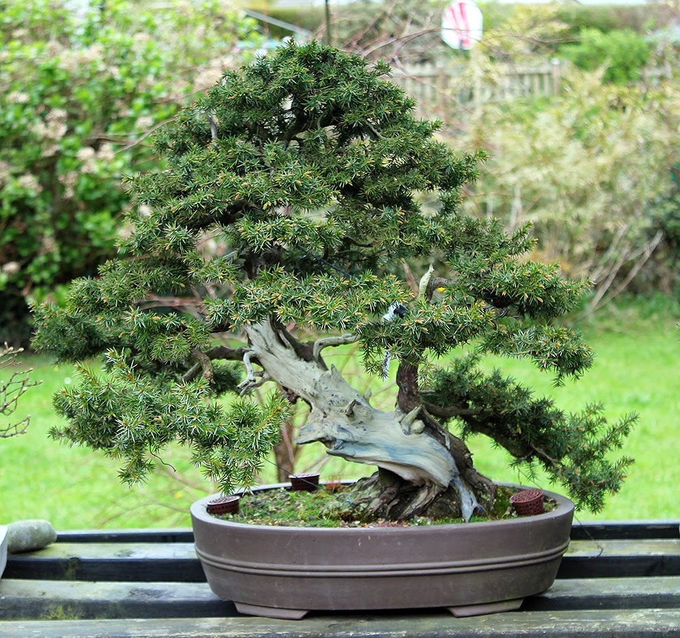Little Cornish Trees April 12th In The Garden And An Exciting