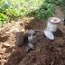 Crack, cerveja e celular são achados por cães em canteiro da Major César