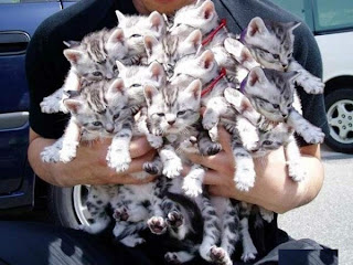 Funny & Cute Cats