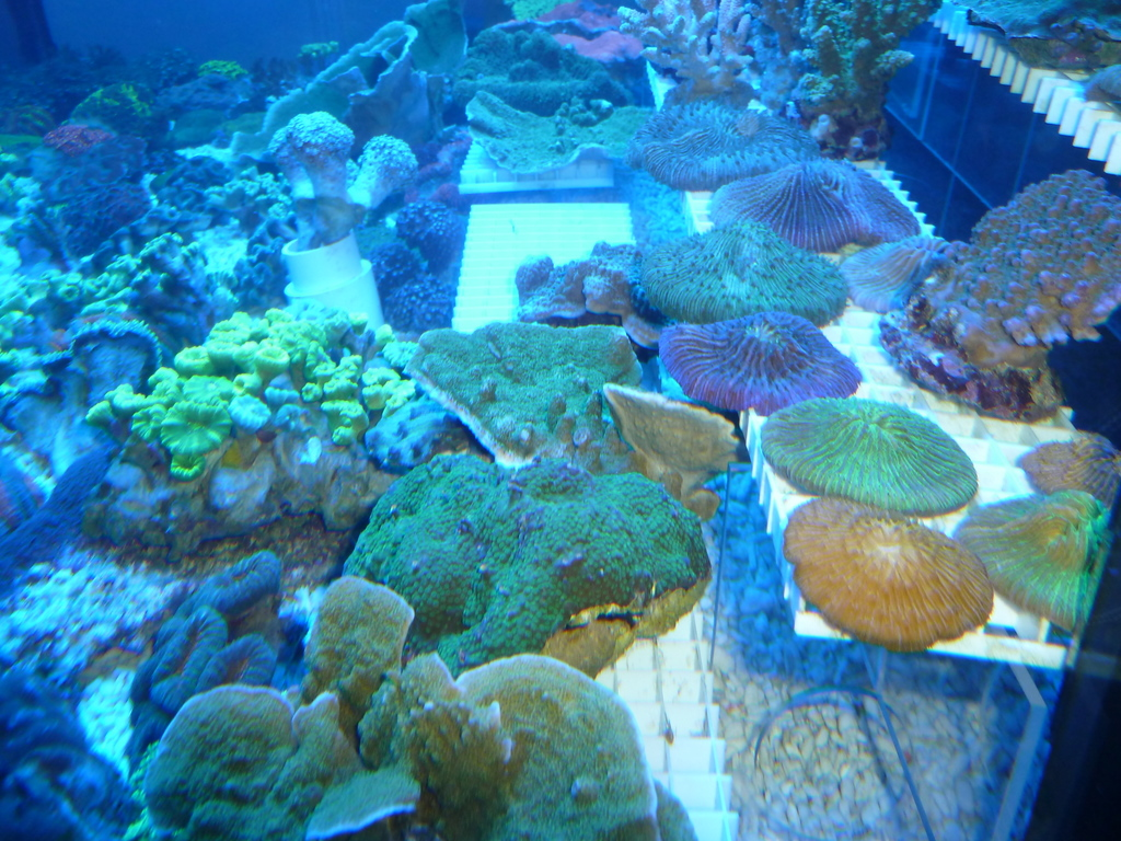 Seahorse Aquariums Weekend Madness New Marine Section