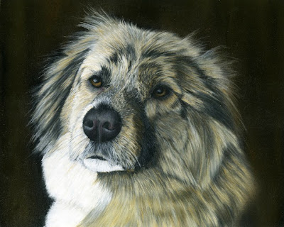 Dog, Pet, Afghanistan, Street Dog, Pet Portrait, Pastel Painting, Pet, Animal