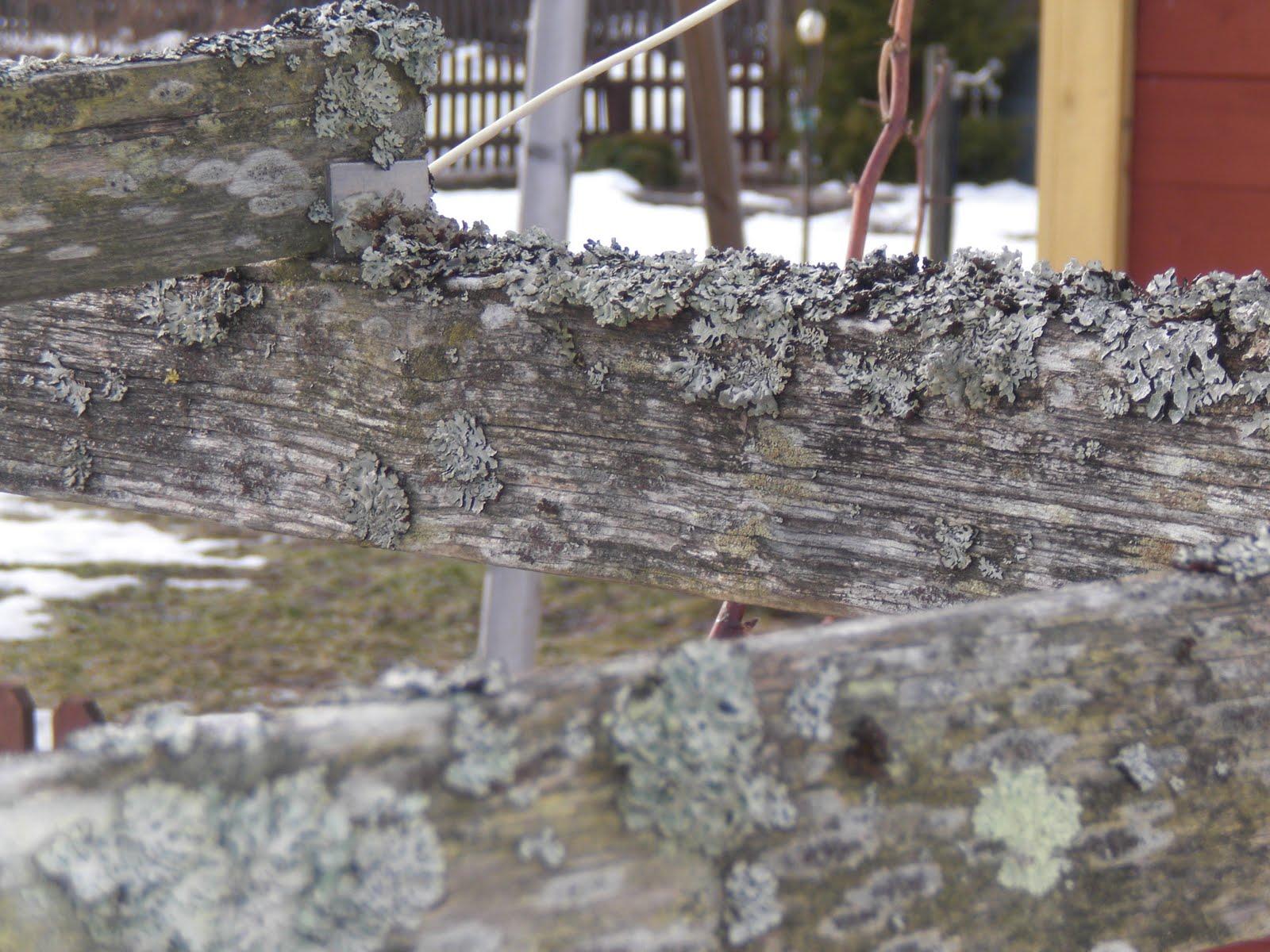 Brevet från kolonin: staket