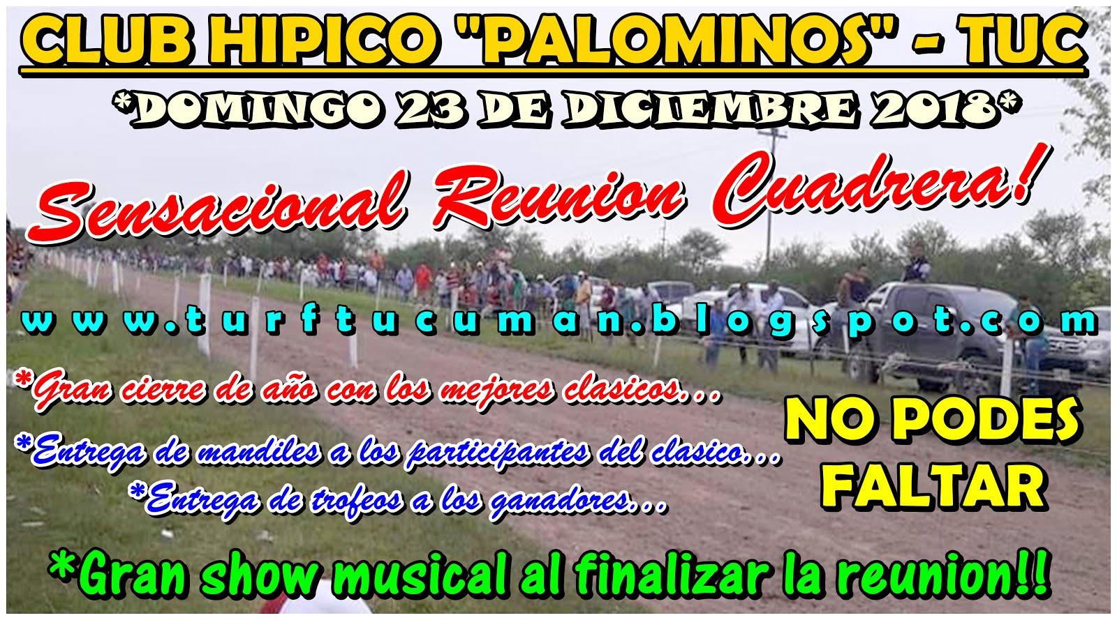 PALOMINOS DGO 23