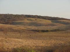 Área de caatinga desmatada  com pastagem