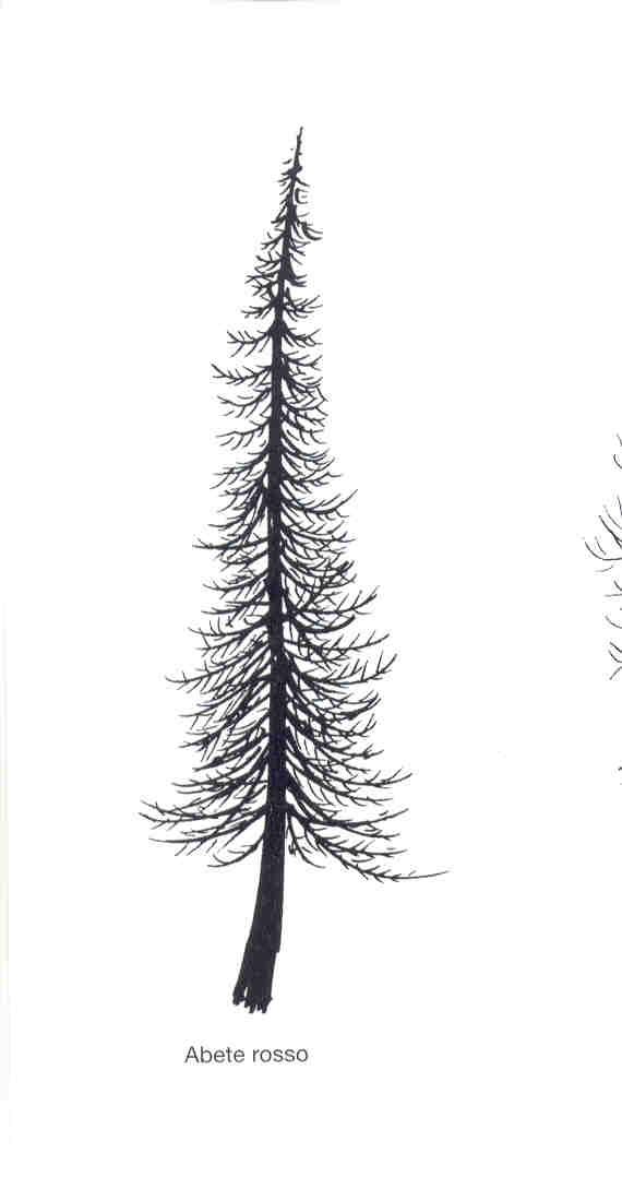 Disegnare Un Albero Sez B